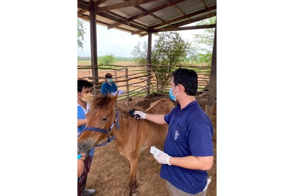 Veterinarian in Thailand vaccinating against AHS